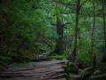 Kusugawa Trail