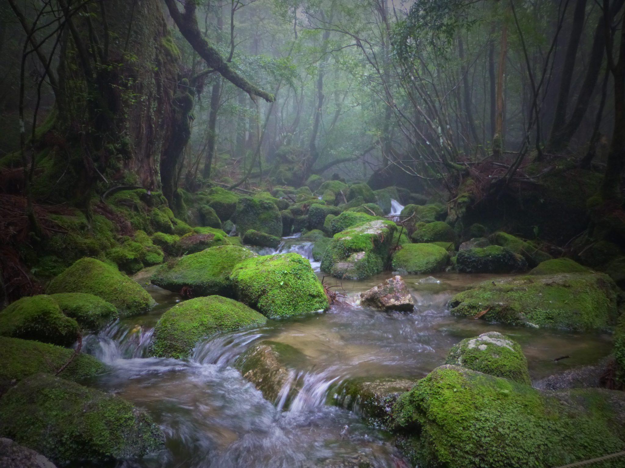 Yakushima Forest Tour Gallery